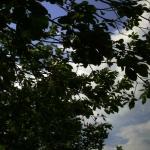 zuschauerfotos-2012-von-simon-11