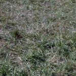 zuschauerfotos-2012-von-wolfgang-14